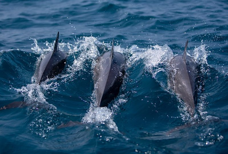 Whale and Dolphin Watching in Kalpitiya