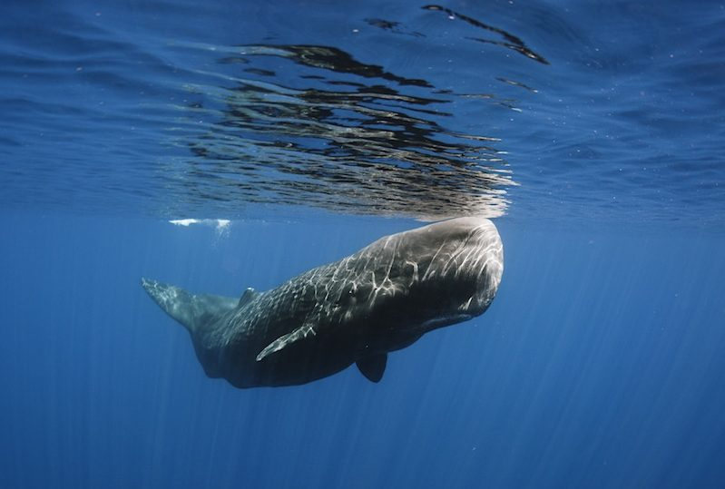 Whale watching in Trincomalee